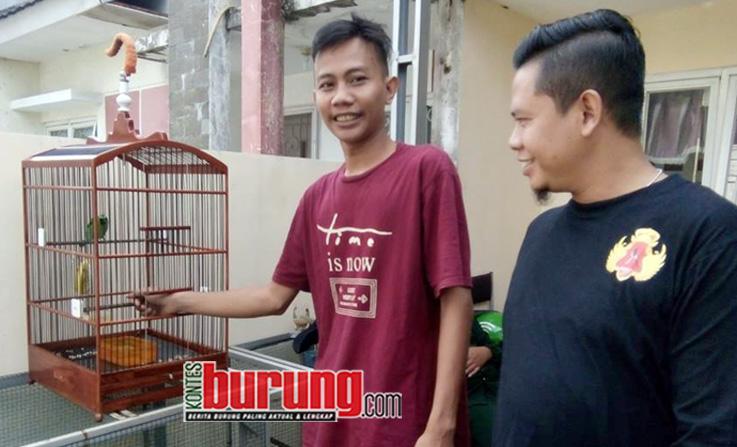 Cucak Hijau Sengkuni Mr.Tanto Ningrat SF Depok