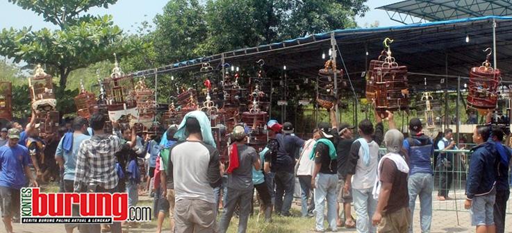 Anis Merah Danu Gondrong Bogor