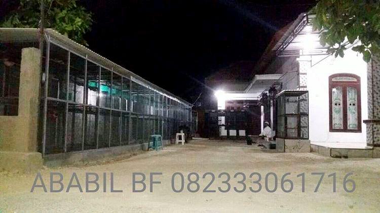 ababil bird farm