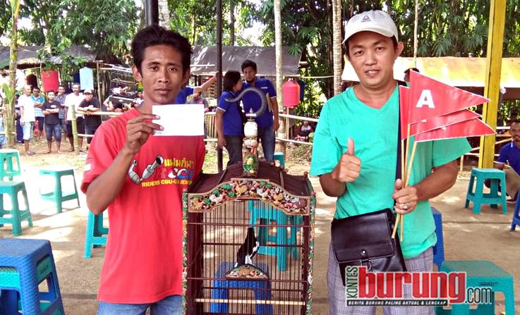 Kacer Rising Star Amunisi Mr.Afuy Borneo Jember